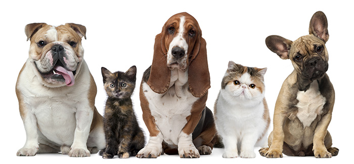 pozikan-comida-piensos-perros-gatos-salburua-vitoria