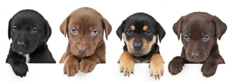 curso adiestramiento cachorros vitoria pozikan