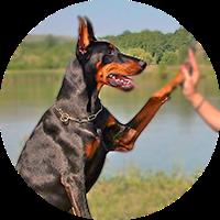 pozikan-adiestramiento-canino-vitoria-euskadi