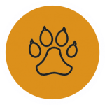 pozikan-peluqueria-canina-salburua-vitoria-corte-uñas-perro
