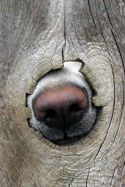 adiestramiento canino olfato vitoria